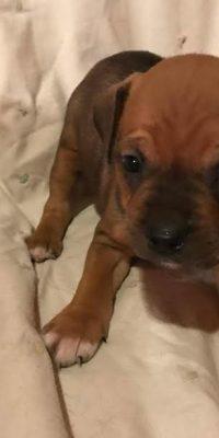 Aruba Puppy 6