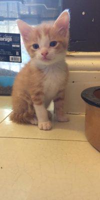 murph kitten