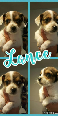 puppy Lance