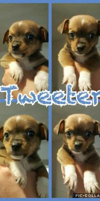 puppy tweeter